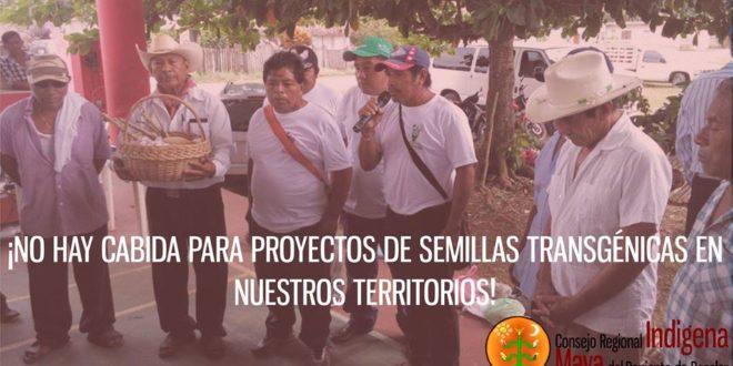 """""""Anulen definitivamente el permiso a Monsanto"""", petición de Bacalar, Quintana Roo ante próxima audiencia en la Corte de Justicia"""