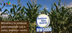 Ministros postergan amparo que promueven indígenas mayas vs Monsanto, en Quintana Roo, México